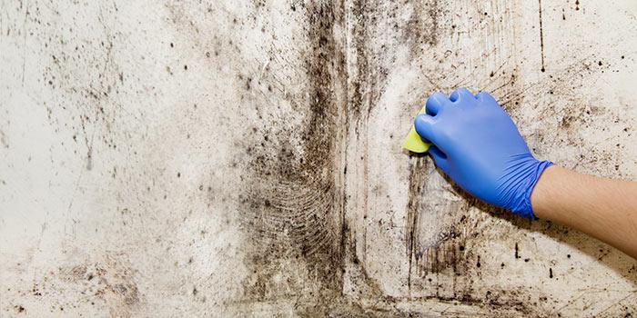 Schimmel an der Wand beseitigen